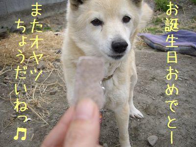 おちび取説8