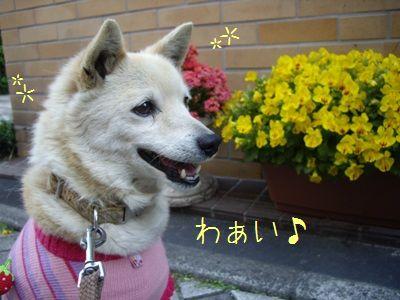 徳島マラソン2