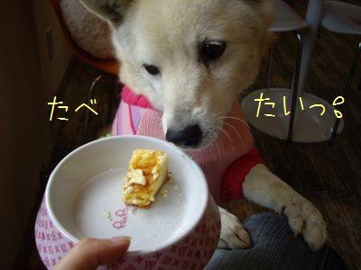 徳島マラソン6