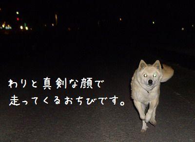 IMGP8951_20081230200545.jpg