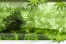 神秘的な深緑のテンプレート