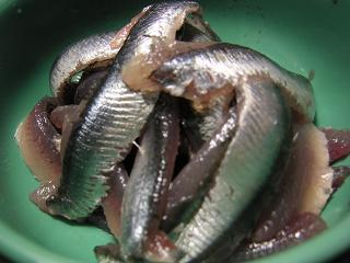 背黒イワシ刺身2 (5)小