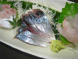 サバ・ホウボウ・真鯛1
