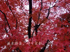 0811_seiryo6.jpg