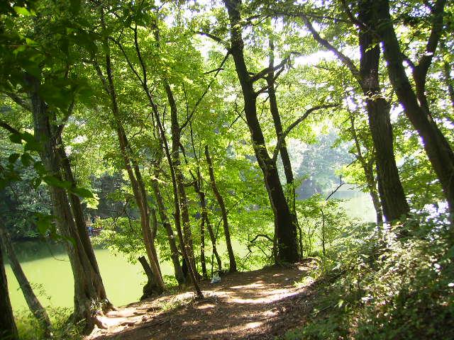 湖畔の遊歩道140