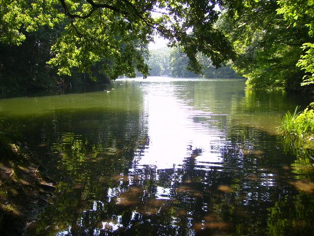 水面の木漏れ日138