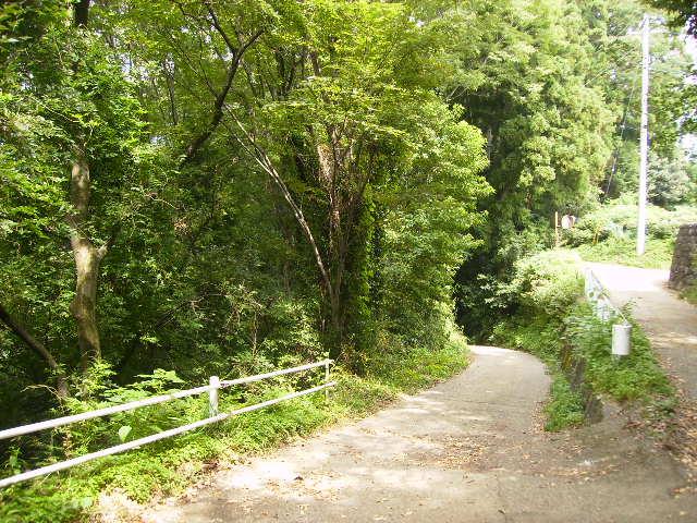 緑の山道21