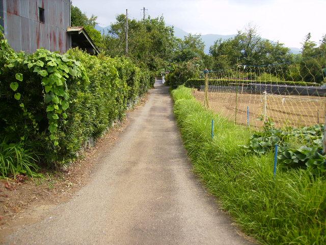 夏の里道16