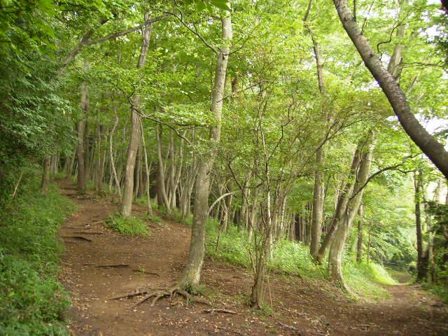 緑の山道62