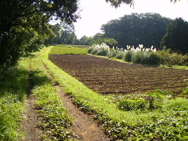 初秋の農道48