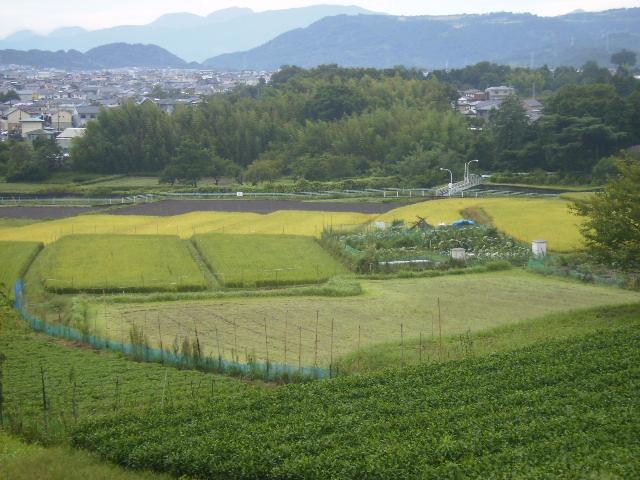 稲田を望む05