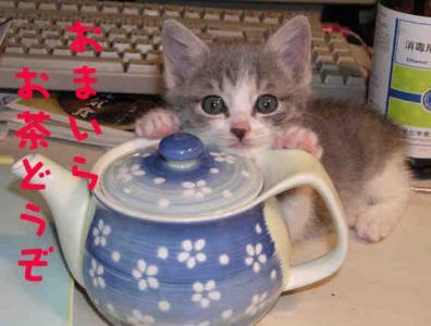 子ニャンコがお茶どうぞ