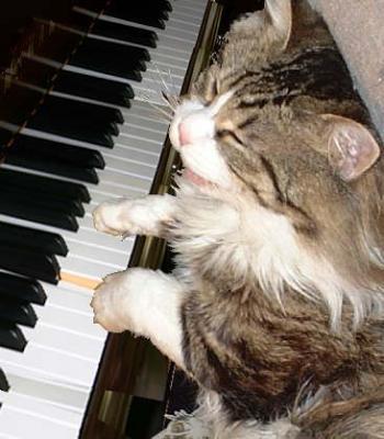 ニャンコがピアノ弾く