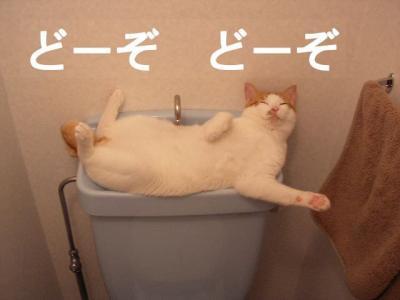 ニャンコ画像:どーぞ!どーぞ!天職ですかニャン?