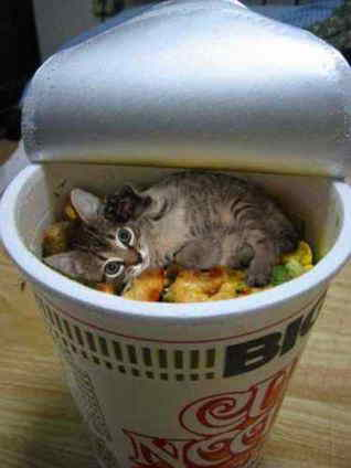 猫ヌードル