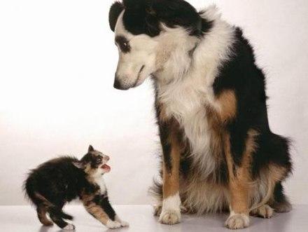 勇気ある猫