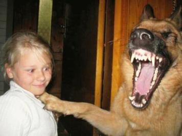 犬も大笑い0065