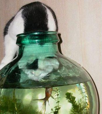 小さな魚も食べたがる