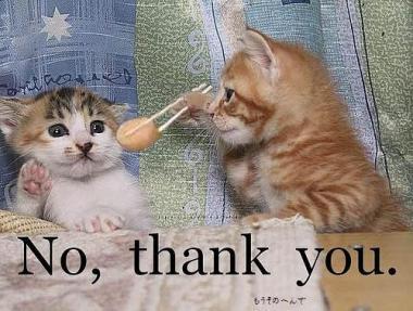 にゃんこの「NO,THANK YOU」面白画像!