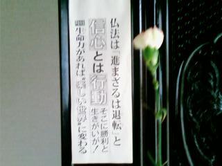 池田先生よりカーネーション