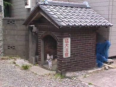 猛犬注意!無修正面白画像