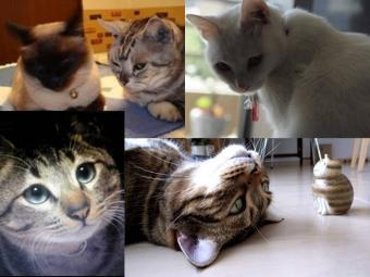 猫たちの完全無修正写真画像