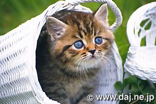 猫の完全無修正写真