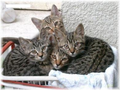 猫の仲良し完全無修正写真