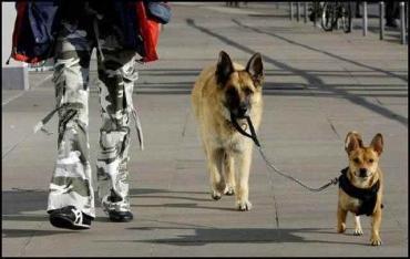 犬を散歩させる犬 完全無修正写真画像