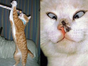 ビックリする猫たち!完全修正写真画像