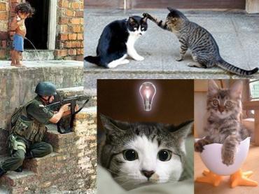 子供も戦争は反対!と猫たちです!完全修正写真画像