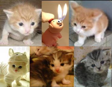 可愛い子猫たち完全修正写真画像