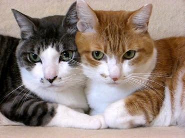 智んころ姉ちゃんと仲良し.:猫!完全修正写真画像