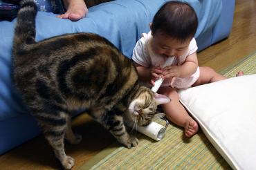 可愛い赤ちゃんと猫・完全修正デジカメ写真画像