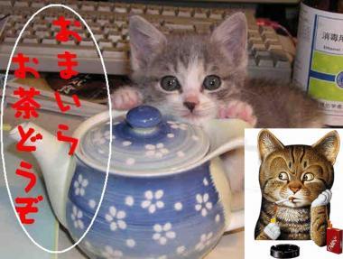 自宅待機の猫.完全修正デジカメ写真画像