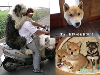 現場の清水町には愛犬家が多い!完全無修正デジカメ写真画像.jpg