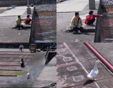 沼津市の井田で釣り中にアヒルを発見?完全無修正デジカメ写真画像