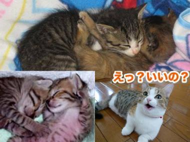 ただ猫の様に いつも抱き合う.完全無修正デジカメ写真