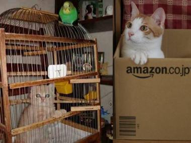 完全無修正写真:猫と小鳥が逆の立場