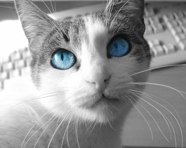 猫高画質写真