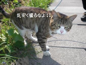 猫・・・パブ嬢の厳しい決まりだわーん?完全無修正写真画像