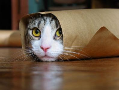 bkn_42_cats_43506.jpg