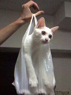 猫のデジカメ写真 詐欺リフォームにゃんか?