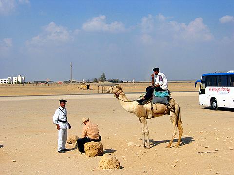 dahshur camel police