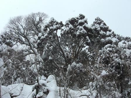 冬山2008 011
