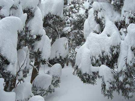 冬山2008 014
