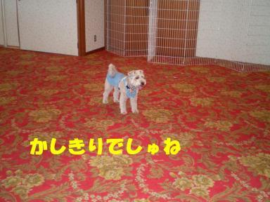 富良野 011