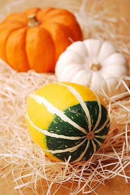 北海道かぼちゃ2