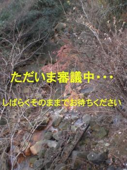 Cimg9867a.jpg