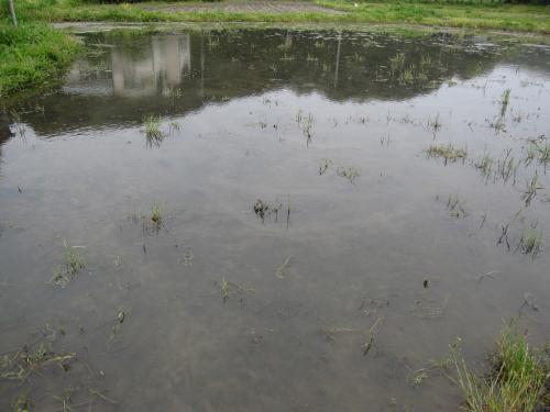 イトメとミジンコの繁殖場所